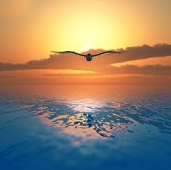 Image of bird flying over the ocean