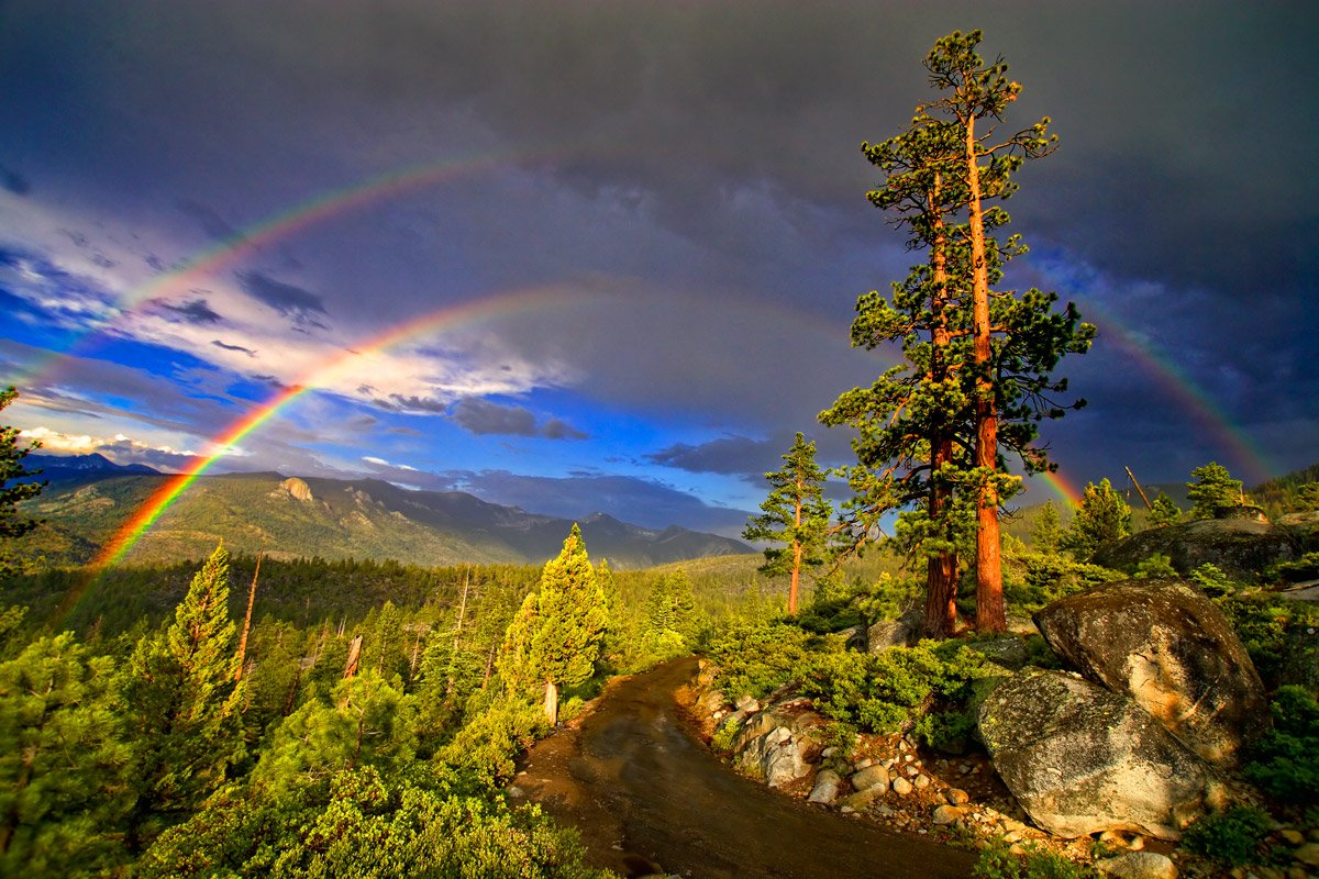 Photo of a double rainbow over a forest